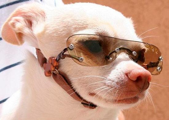 Estética Para Salud Gafas Perros¿una O Sol Cuestión De vmO80wNn