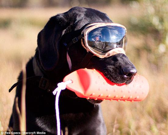 3993d28f8f gafas de sol para proteger los ojos del perro – Tienda Veterinaria Blog