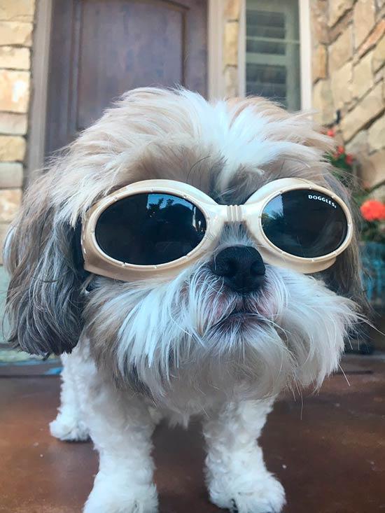 lentes para perros ciegos