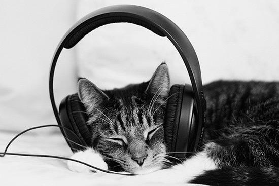 musica-para-gatos