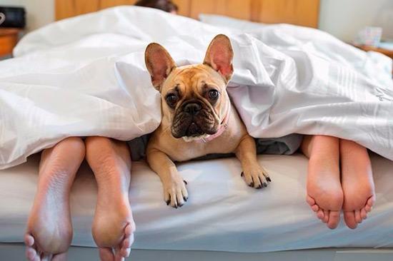 Dormir con tu mascota ayuda a descansar mejor - Tienda Veterinaria Blog