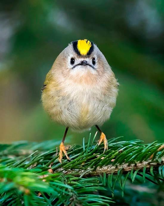 foto pajaro Ossi Saarinen - Las fotos de pájaros de Ossi Saarinen te harán creer en la existencia de los Angry Birds