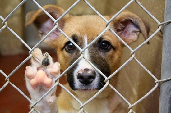perro en adopcion - Desciende la compra de mascotas y aumenta la adopción en la última década