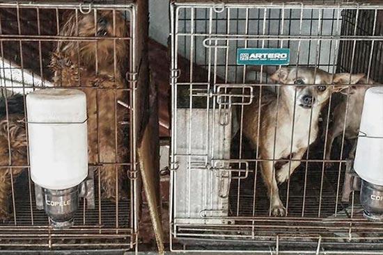 El Refugio denuncia criadero ilegal - Juzgado por maltrato animal un propietario de un criadero ilegal de perros