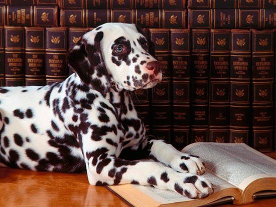 perro en la biblioteca - Cachorros anti estrés para los estudiantes en la Universidad de Amsterdam