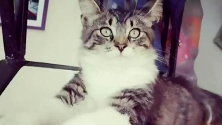 gato viajero - Un gato se mete en una caja y viaja más de mil kilómetros
