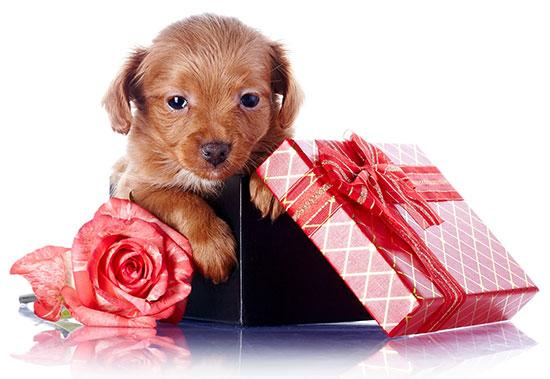un perro no es un regalo - Alemania prohíbe adoptar perros de las protectoras durante la Navidad