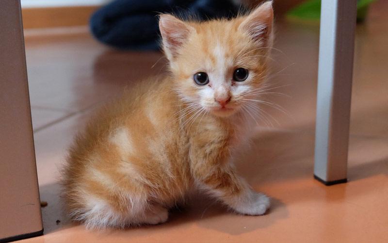 accesorios gatitos