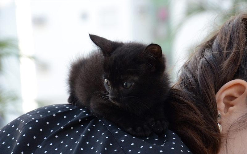 gatito con la familia