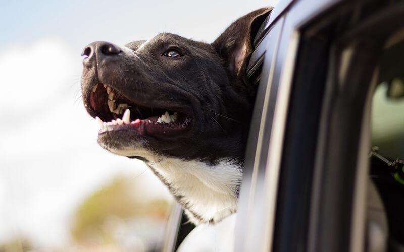 TOP 5 de películas para perros