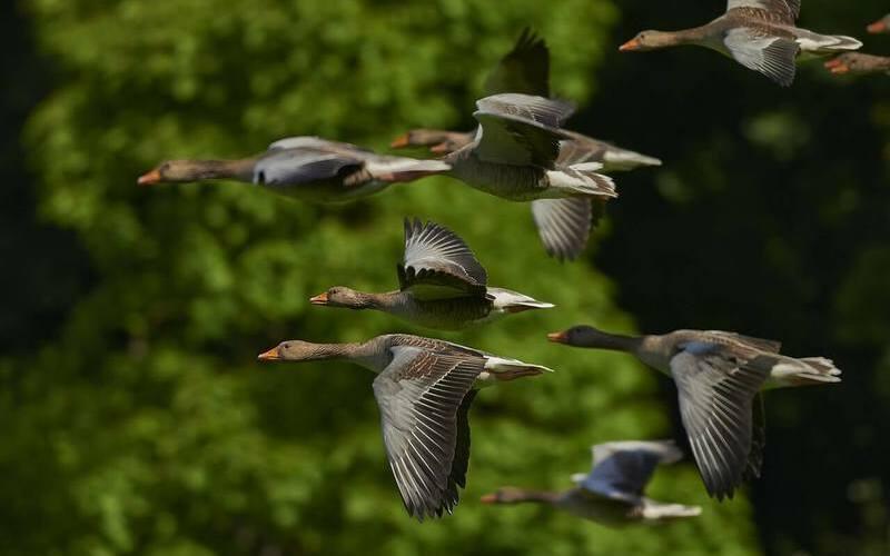 ¿Qué tipos de aves existen?