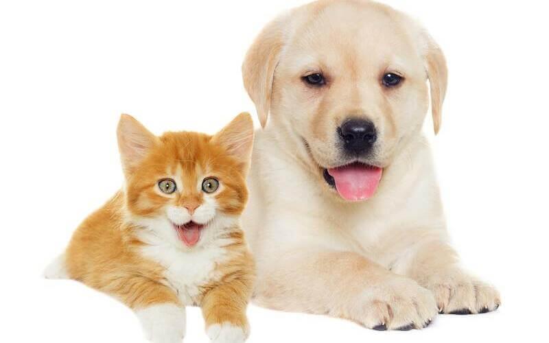 Vitaminas para mascotas